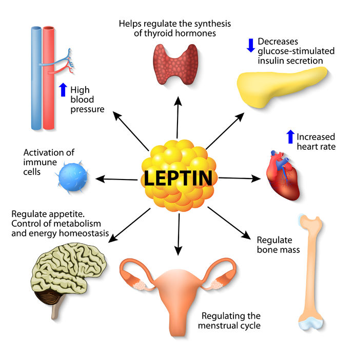 leptin is a hormone made by adipose cells that helps regulate appetite, control of metabolism, energy homeostasis, activation of immune cells, and other function. human endocrine system