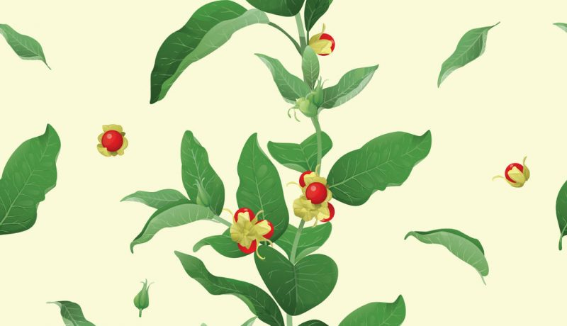 Ashwagandha for Thyroid Health