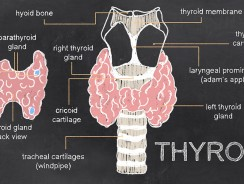 Normal Thyroid Levels