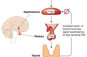 What You Should Know about the Thyroid Feedback Loop